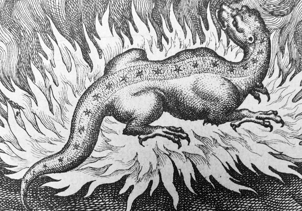 Salamandra-nel-Fuoco-1.jpg
